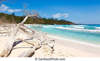 died tree on sandy beach at Seychelles