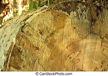 Died-wood tree 003