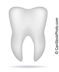 diente, 3d, blanco