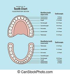 diente, gráfico, con, diente, entra en erupción, ilustración, vector, en, azul, fondo., dental, concept.