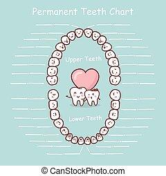 diente permanente, gráfico, registro