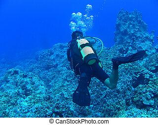 diep, blauwe , duiken