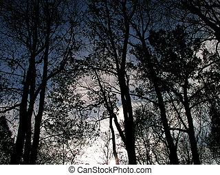 diep, donker, bomen
