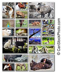 dier, collage