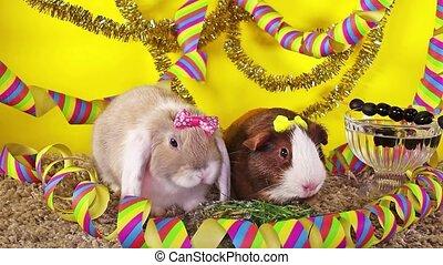 dier, concept., jaar, eva, nieuw jaar, konijn, cavy, feestje, vrolijke