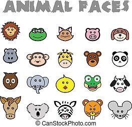 dier, gezichten
