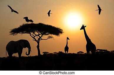 dier, savanne, op, silhouettes, ondergaande zon , safari, afrikaan