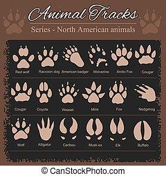dier, voetafdrukken, -, noordelijke amerikaan, dieren