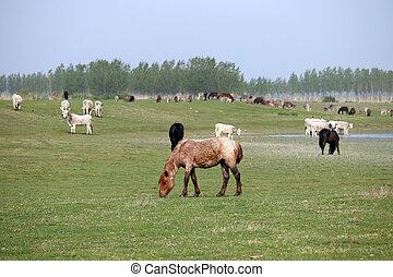 dieren, boerderij, wei, koien, paarden