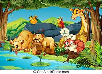 dieren, bos