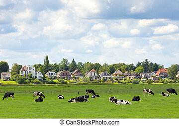 Farmland with cows with the town of Dieren (Gelderland) in the background. The Netherlands