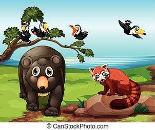 dieren