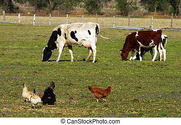 dieren, op, boerderij