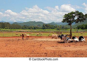 dieren, op, een, boerderij