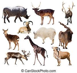 dieren, op, zoogdier, set, witte