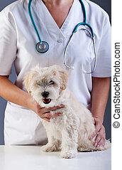 dierenarts, doggy, weinig; niet zo(veel)