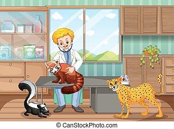 dierenarts, het helen, wilde dieren, in, de, kliniek