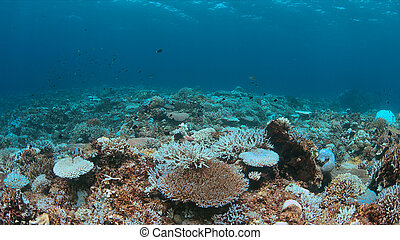 dies, barrera coralina