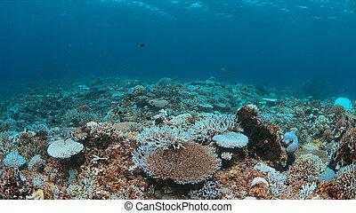 dies, récif corail