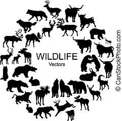 diferente, animais, cobrança, silhuetas, selvagem, espécie