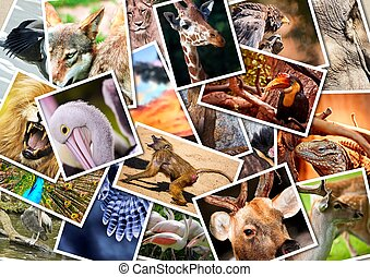 diferente, animales, collage