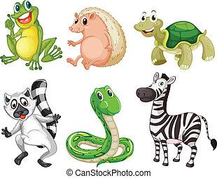 diferente, animales, especie