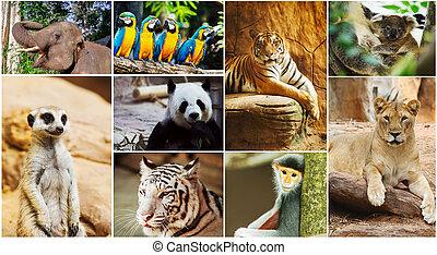 diferente, animales