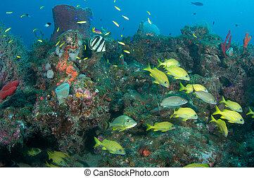 diferente, borda, florida., muitos, peixe, recife, leste, espécie, sul