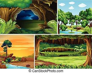 diferente, cenas, quatro, floresta, tempo, dia