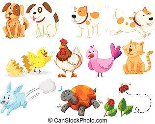 diferente, clase, de, animales domésticos