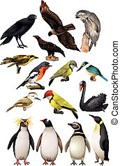diferente, clase, de, aves