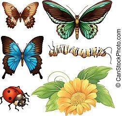 diferente, clase, de, mariposas, y, bichos