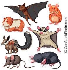diferente, clase, de, pequeño, fauna