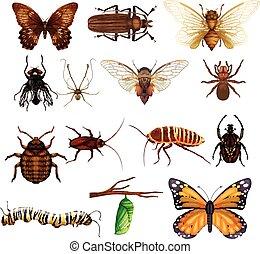diferente, clase, de, salvaje, insectos