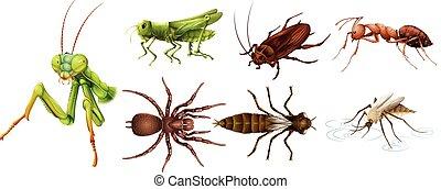 diferente, clases, de, insectos