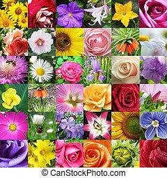 diferente, collage, hermoso, flores