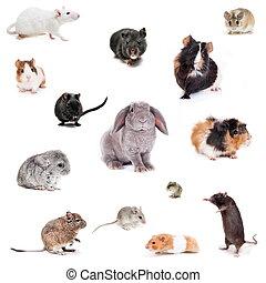 diferente, conjunto, spieces, roedores