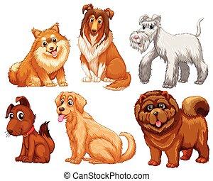 diferente, espécie, cachorros