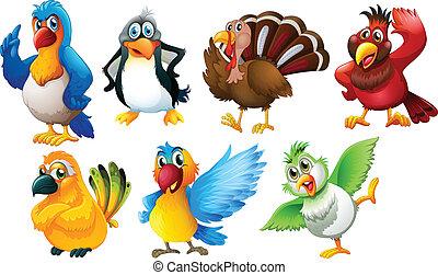 diferente, espécie, de, pássaros