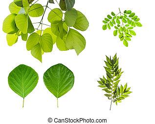 diferente, folhas, cortando, cobrança, isolado, fundo, branca, incluir, path.