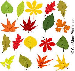 diferente, folhas, isolado, cobrança, outono, branca