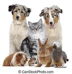 diferente, grupo, mascotas