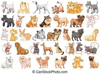 diferente, jogo, animais estimação