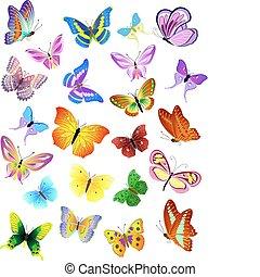 diferente, jogo, borboletas