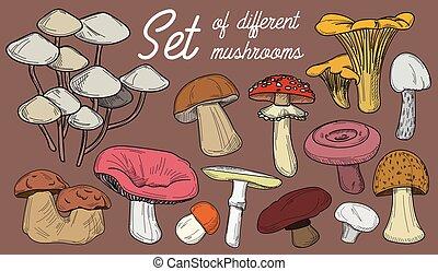 diferente, jogo, cogumelos