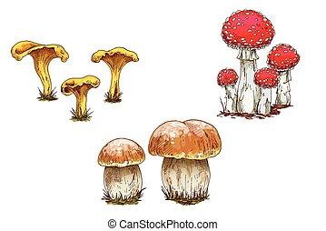 diferente, jogo, illustration., boné, cogumelos, isolado, cogumelos, experiência., vetorial, laranja, chanterelles, branca, amanita.