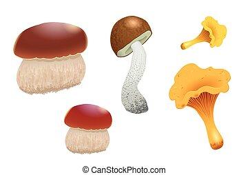 diferente, jogo, illustration., boné, isolado, cogumelos, experiência., vetorial, cep., laranja, branca, boletus, chanterelles