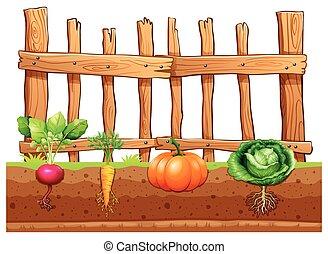 diferente, jogo, legumes