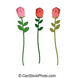 diferente, jogo, rosas, três, ilustração, experiência., cores, vetorial, flores brancas