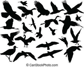 diferente, pájaro, colección, -, vector